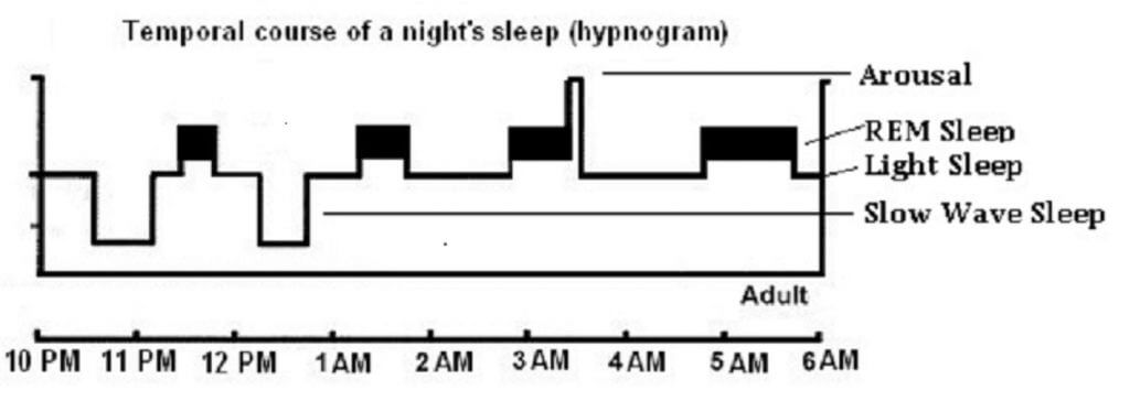 Children Grow In Slow Wave Sleep And Probablys Repair During Slow Wave Sleep Memory Work Is Thought To Happen In Both Rem Sleep And Slow Wave Sleep